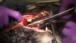 Dental - Clovis, Fresno, Sanger, 93611