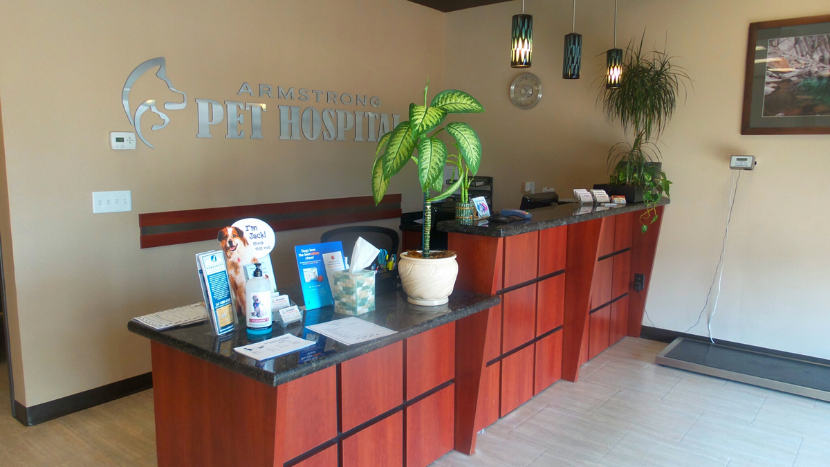 Clovis Animal Hospital Tour - Armstrong Pet Hospital