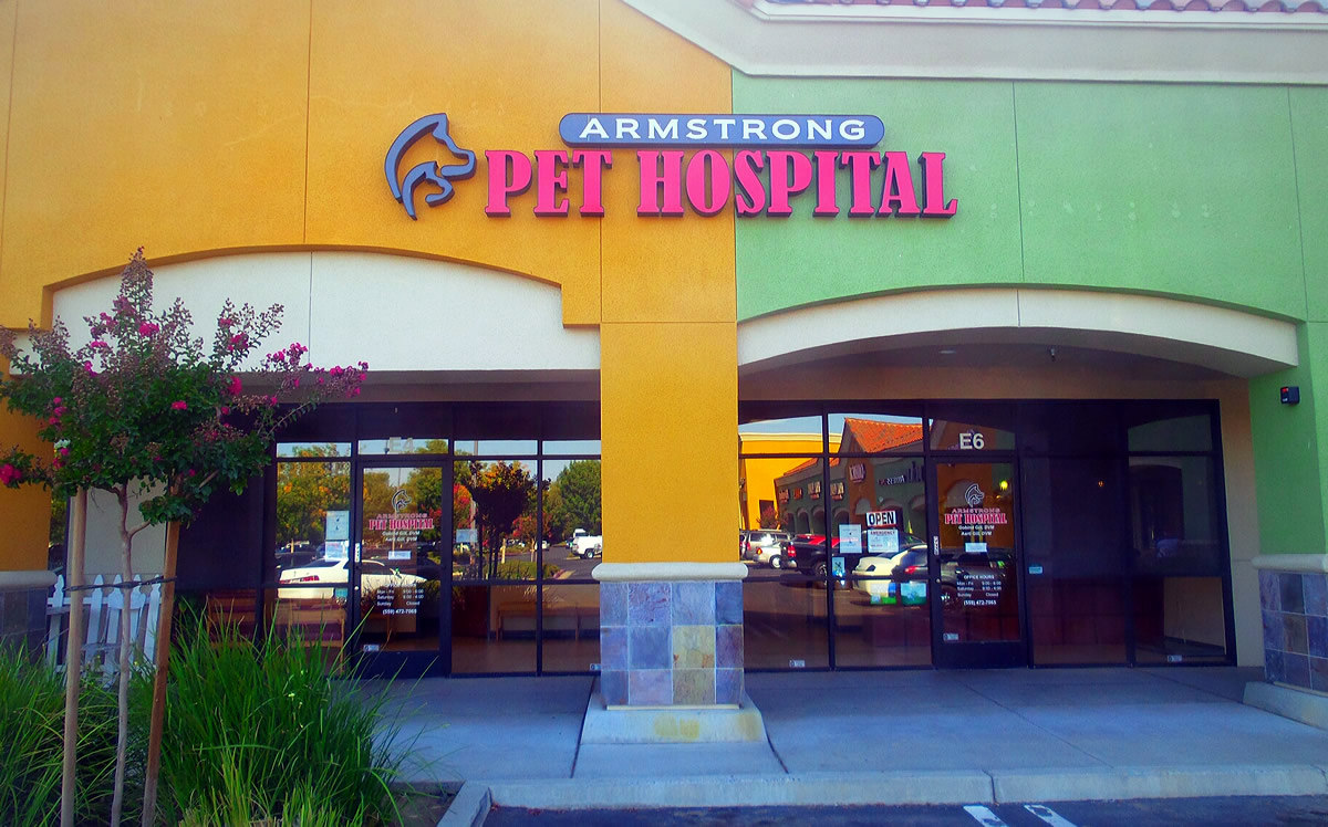 Contact Armstrong Pet Hospital Clovis